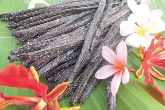 Une filière vanille de haute qualité dédiée à l'export