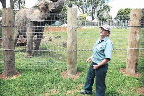 Un éléphant tue son gardien