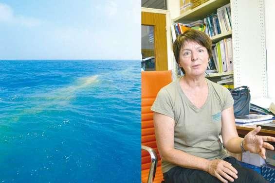 « Ce n'est pas de la pollution,  ce sont des micro-algues »