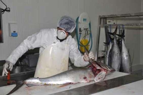 Les Pêcheries du Nord face à leurs déchets