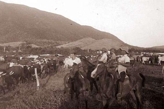 Voyage au temps des conduites de bétail