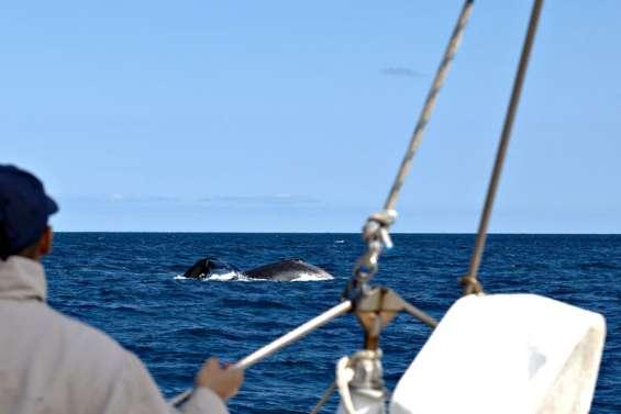 Une patrouille dans le sillage des baleines