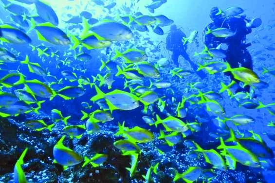 Derniers vestiges du récif corallien