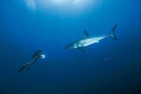 « Poisson parmi les poissons »