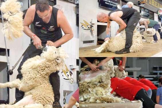 Le pays rêve de moutons aux Jeux Olympiques