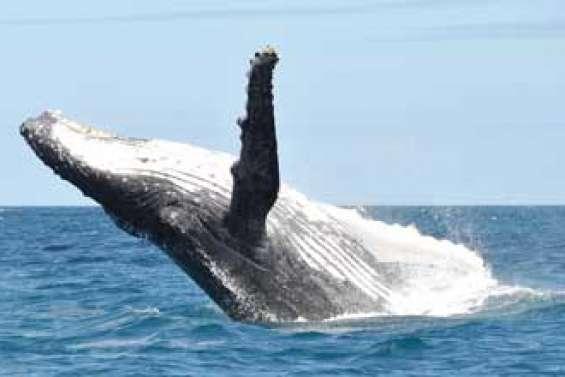 Profession, montreur de baleines