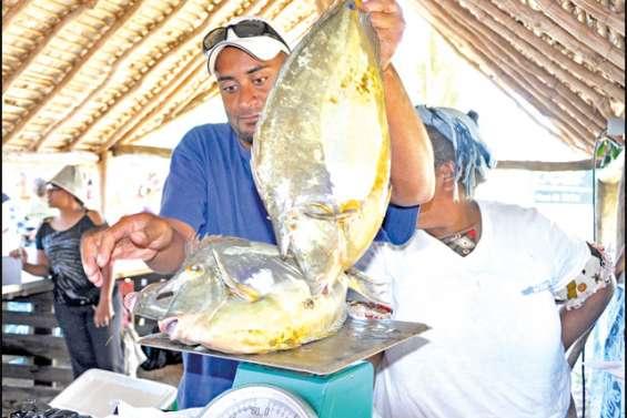 Du poisson du Nord sur les étals