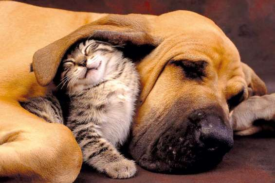 Comme chiens et chats