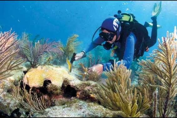 Rendre les coraux plus forts