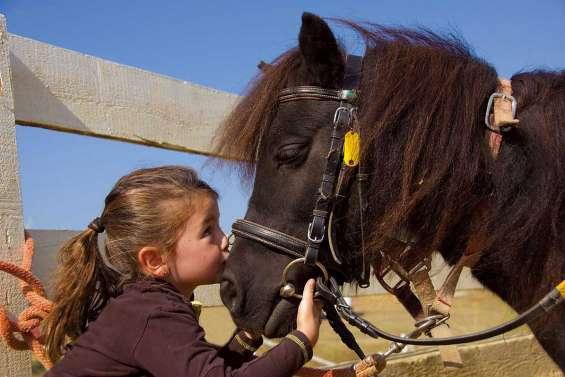 Mon cheval, ma bataille