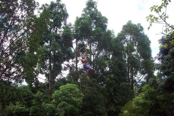 Les jeunes s'accrochent aux branches