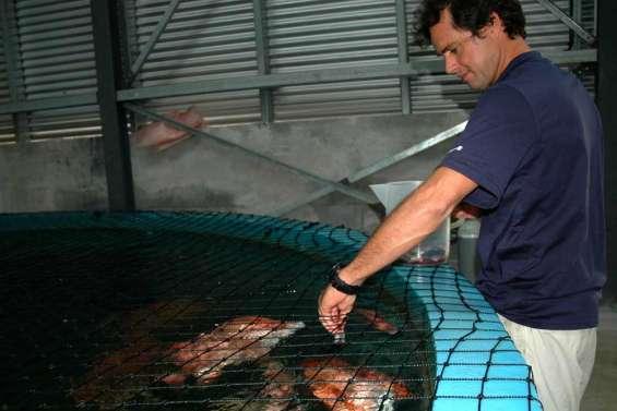 L'aquaculture mise sur le poisson