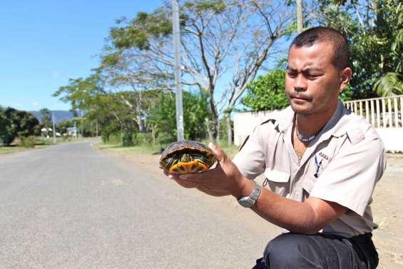 A la poursuite de la tortue illégale