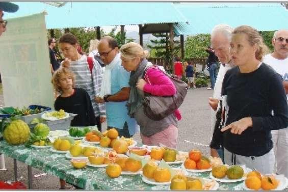 La commune fête les agrumes