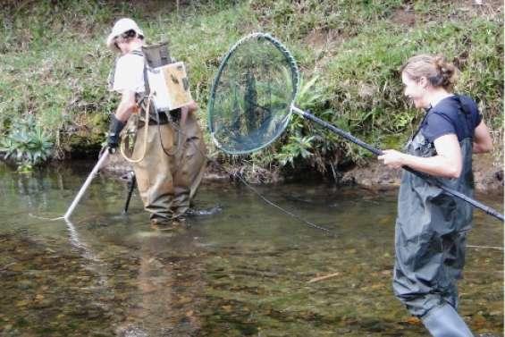 Au courant des poissons