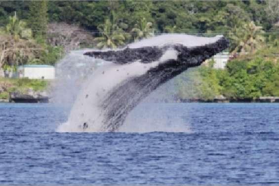Une année riche en baleines