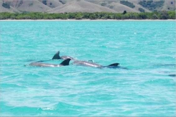 Des dauphins en cadeau