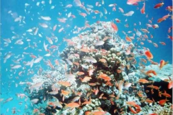 Un Œil sur les coraux du Sud