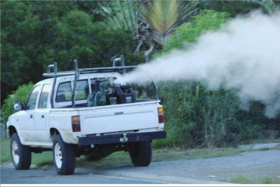 Bourail défie les moustiques