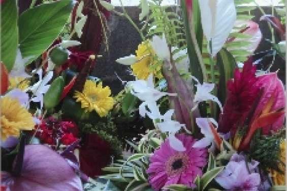 Les plantes font leur festival