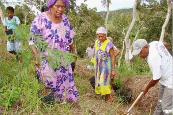 Une plantation exemplaire
