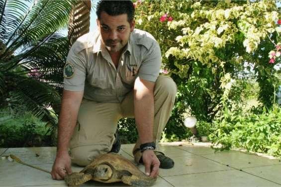 Des tortues abandonnées