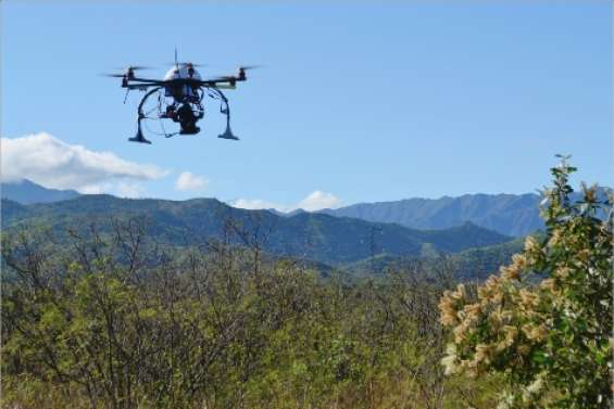 Un drone sur les niaoulis