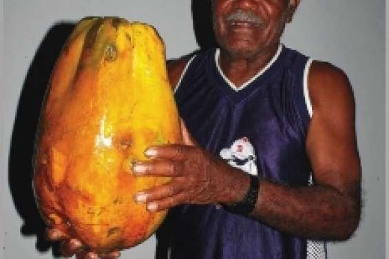 Une papaye de six kilos