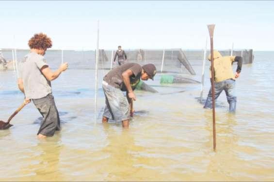 Des bêches-de-mer bichonnées