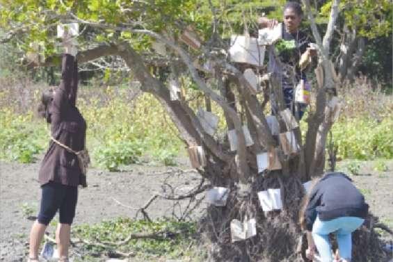 La culture de l'arbre