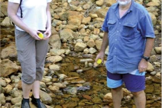 Les creeks sous vigilance