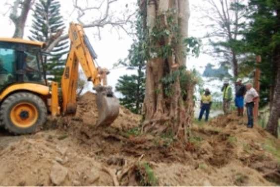 Des racines causent une pollution de l'eau