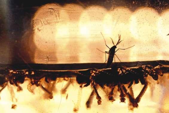 Epidémie de Zika : l'expertise du Caillou sollicitée
