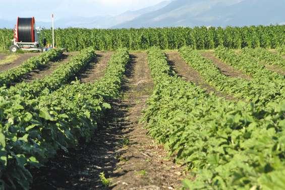 Les formations agricoles en quête d'apprentis