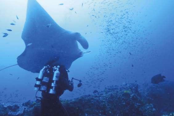 Les récifs coralliens  du Caillou : un trésor