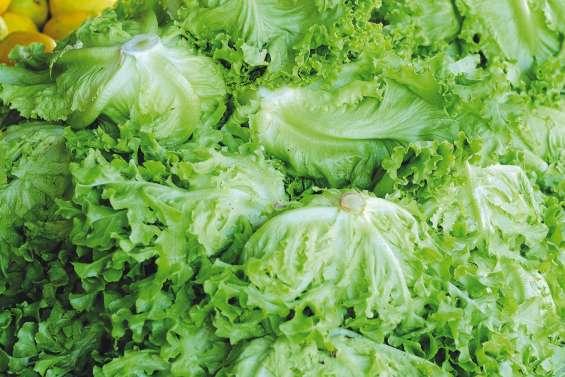 Appel à la vigilance sur le prix des salades