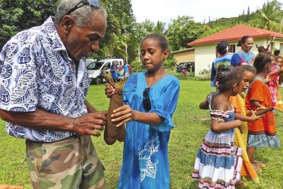 L'igname renouvelle les liens sociaux entre clans à Kunié