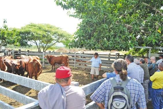 Des journées pour améliorer les performances des élevages