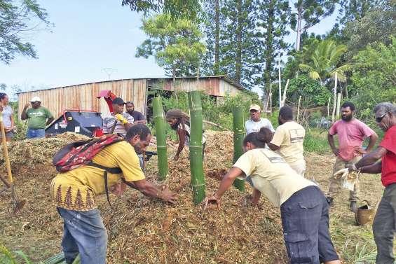 Les agriculteurs kunié misent sur le compost bio