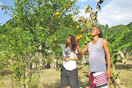 Les mandarines se font un peu désirer