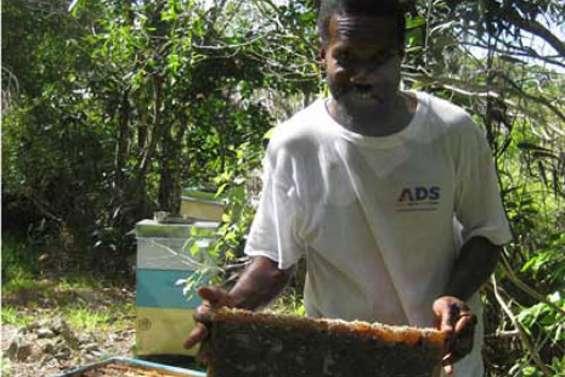 Le miel d'Ouvéa est un nectar