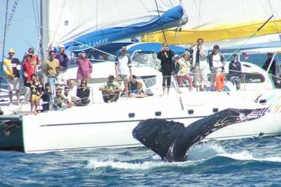 Moins de pression sur les baleines