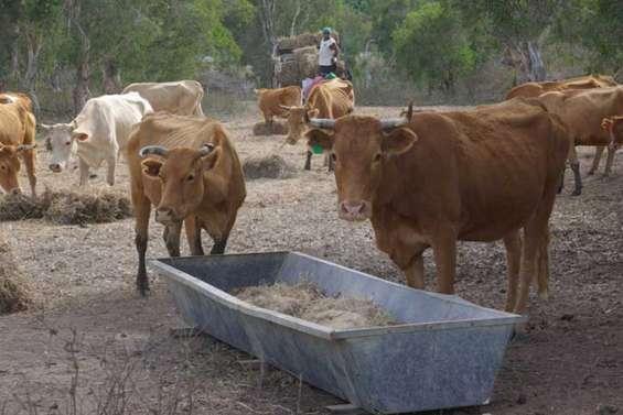 Les agriculteurs rejoignent la FNSEA
