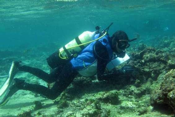 L'état de santé  des coraux préoccupe