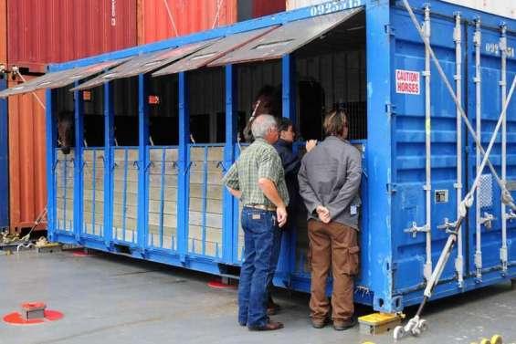 Derniers chevaux avant fermeture de la quarantaine