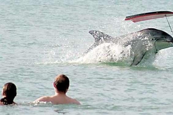 Le dauphin Moko retrouvé mort sur une plage