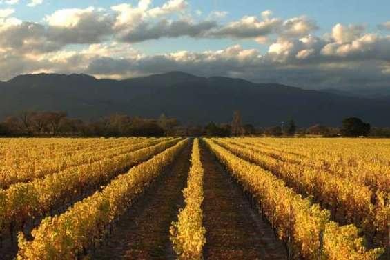 Le vin kiwi à la conquête du monde