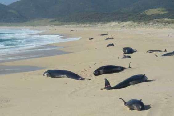 Trois jours pour sauver les baleines