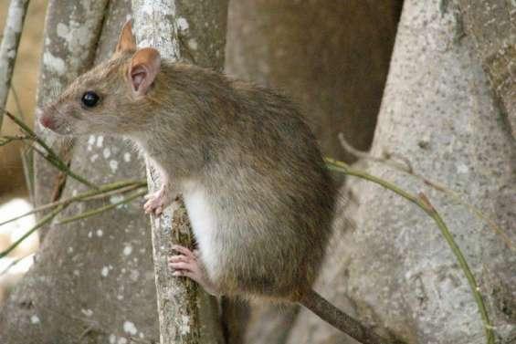 Quand les espèces invasives menacent la biodiversité
