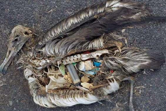 Victimes des déchets